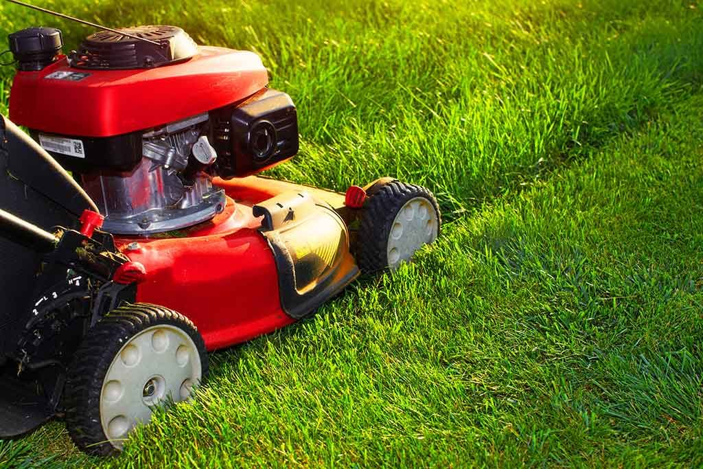 keep your lawn green all summer